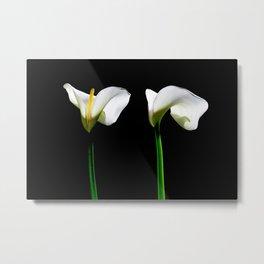 White Lillys Metal Print
