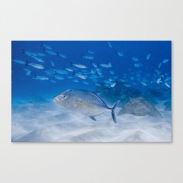 Bait ball Predators Canvas Print