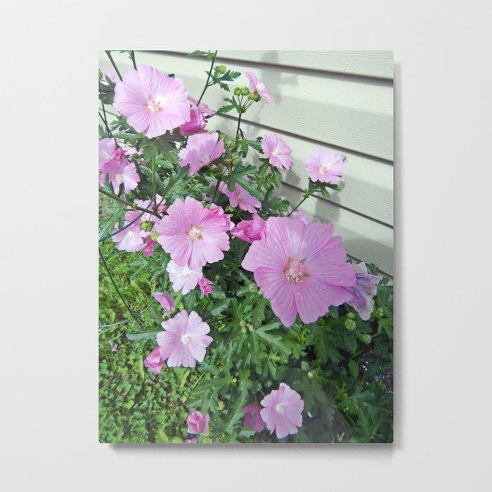 Pink Musk Mallow Bush in Bloom Metal Print