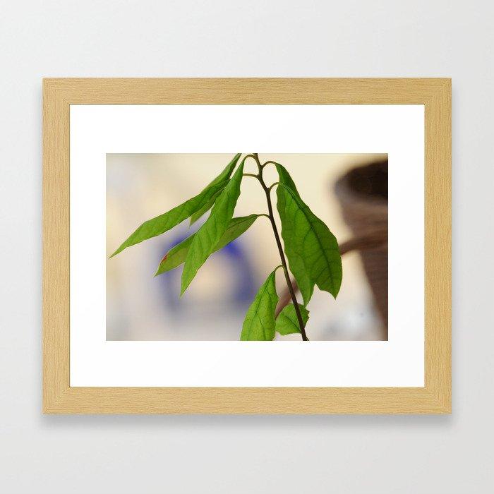 avocado seedling Framed Art Print