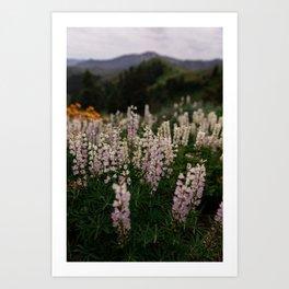 Flower Photography by Patrick Hendry Art Print