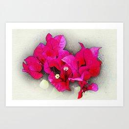 Bougainvillea Flowers Art Print