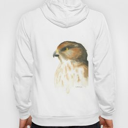 juvenile red-tailed hawk Hoody