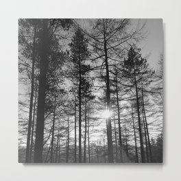Winter Pine Forest 1 Metal Print