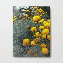 Yellow Button Flowers Metal Print