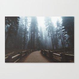 Sequoia Trail Canvas Print