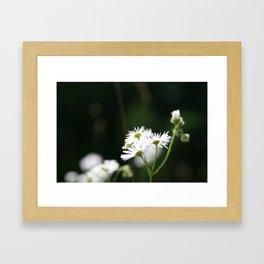 Enlightened Framed Art Print