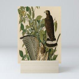 91 Broad winged Hawk Mini Art Print