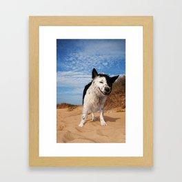 Border Collie Framed Art Print
