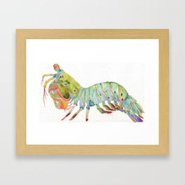 Peacock Mantis Shrimp Framed Art Print