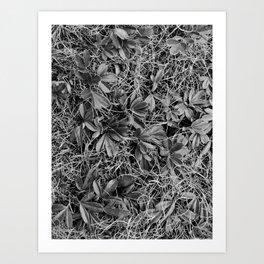 B&W Autumn Turf Art Print