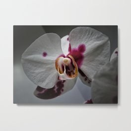 My growling dragon Orchid. Metal Print