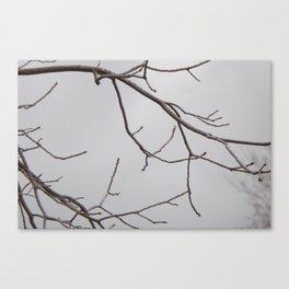 Cold Grey Sky Behind Leafless Tree Branches Canvas Print