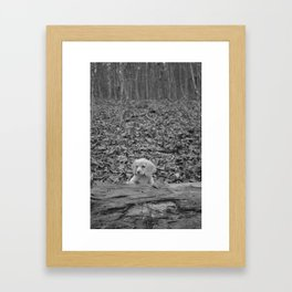 Nature Talks Back Framed Art Print