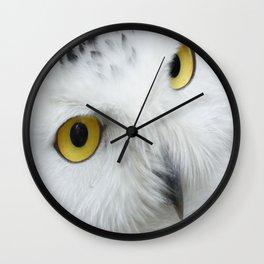 Snowy Owl Eyes Wall Clock