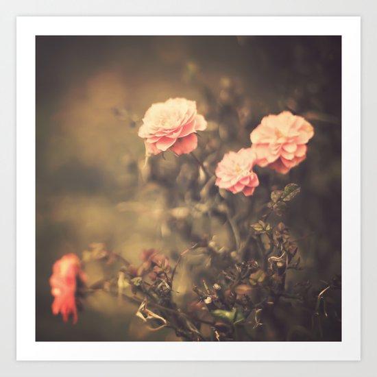 Romantic Vintage Roses (Vintage Flower Photography) Art Print
