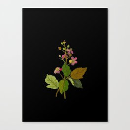 Rubus Fruiticosus Mary Delany Vintage Botanical Collage Paper Flowers Canvas Print