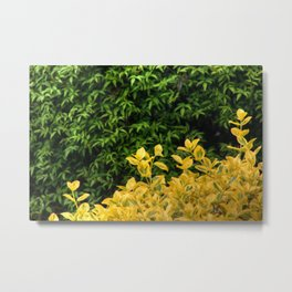 Yellow Against Green Metal Print