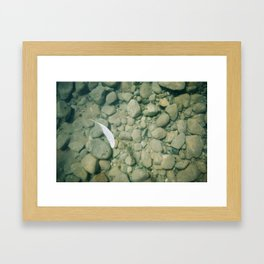 Feather In Walloon Framed Art Print