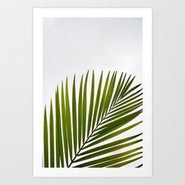Palm white Green Art Print
