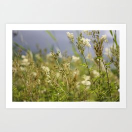 Meadow I Art Print