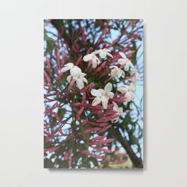Pink Buds and Jasmine Blossom Close Up Metal Print