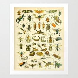 """Adolphe Millot """"Insectes"""" Nouveau Larousse 1905 Art Print"""