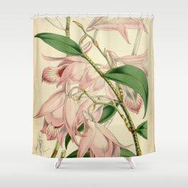 Dendrobium maccarthiae Shower Curtain