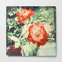 Textured Chicago Peace Rose Metal Print