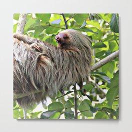 Sloth 2 Metal Print