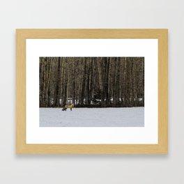 Beautiful Red Fox, No. 1 Framed Art Print