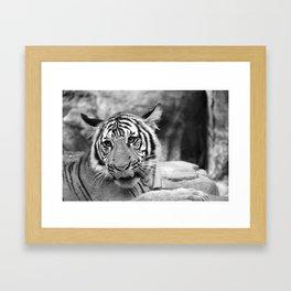 Tiger#3 Framed Art Print