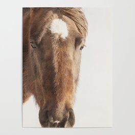 Vintage Style Horse Portrait in Color Poster