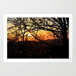 Sun through trees Art Print