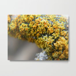 Golden Lichen Metal Print