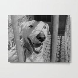 Happy Doggo Metal Print