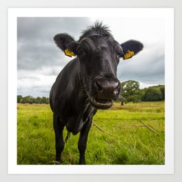 Irish Cow Art Print