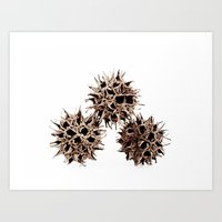 gumball Art Prints featuring Gumball Trio by Beth Thompson