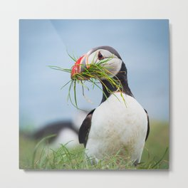 Puffin on the lookout | Fine Art Photography Print | Landscape Art Poster Metal Print