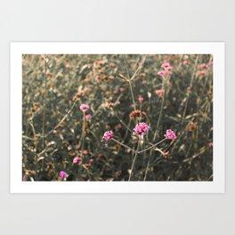 Pink Flowers from Our Secret Garden Art Print