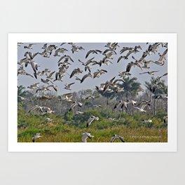 The Birds of Cutler Bay Wetlands Art Print