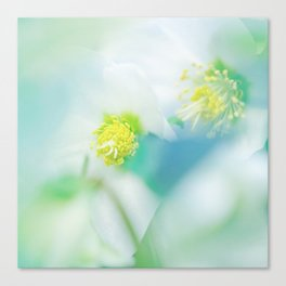 Soft Hellebores Canvas Print