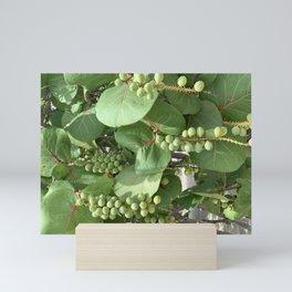 Sea Grape Bunch Mini Art Print