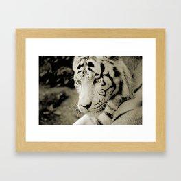 THE WHITE TIGER III Framed Art Print