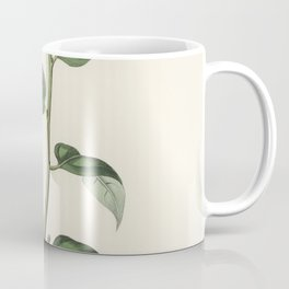 Croton eleuteria  from Medical Botany (1836) by John Stephenson and James Morss Churchill Coffee Mug