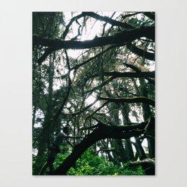Spider Web Trees Canvas Print