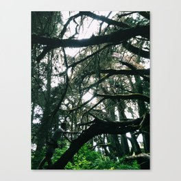 Spider Web Trees Canvas Print