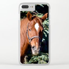 Miss Sadie - A horse, of course Clear iPhone Case