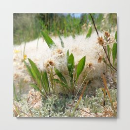 Watercolor Seed, Alpine Seeds 02, Trapped by the Fleabane, Dunraven Trail, RMNP, Colorado Metal Print