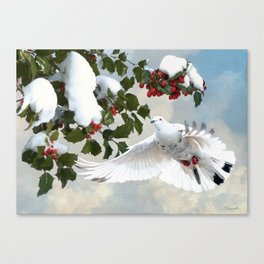 White Dove and Holly Canvas Print